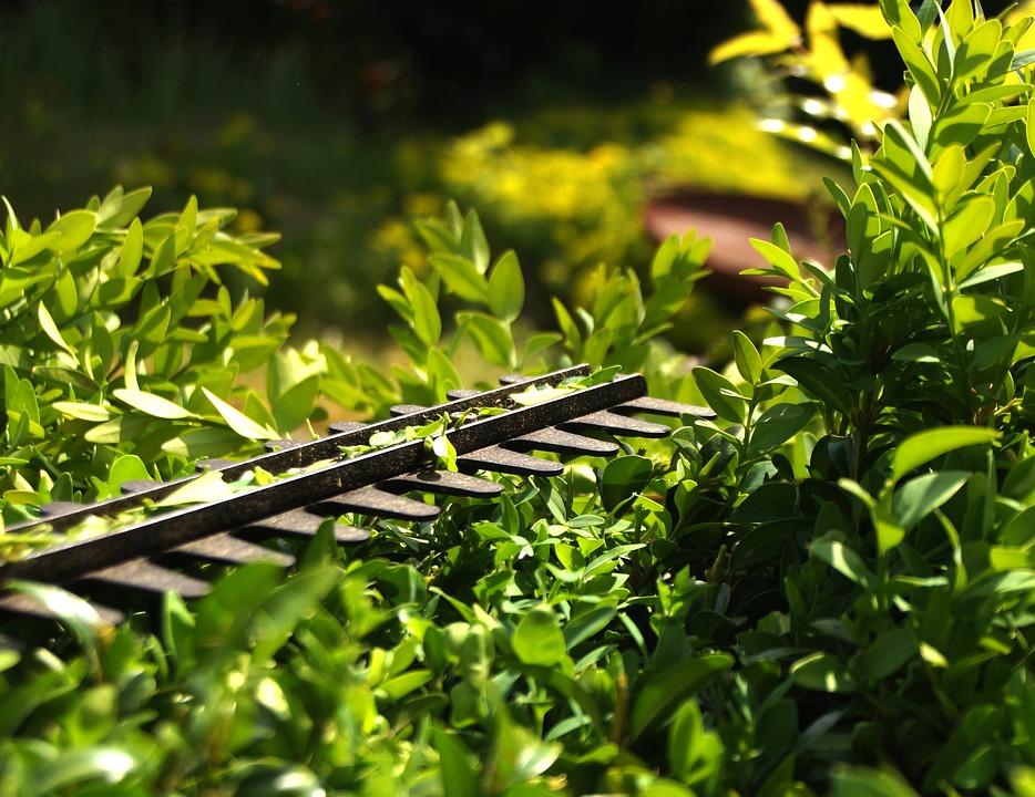Quelles sont les qualités d'un bon jardinier ?