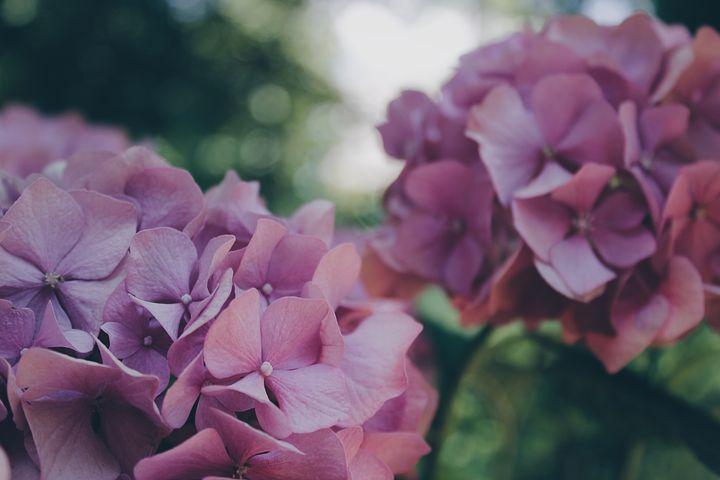 Choisir des plantes faciles à entretenir pour avoir un beau jardin en tout temps