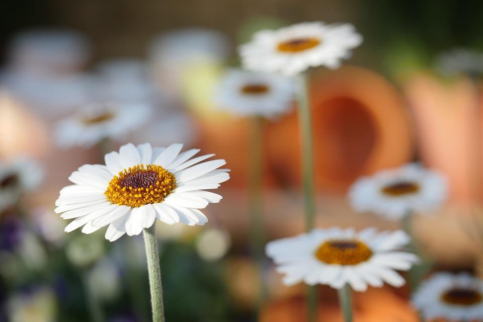 Comment initier vos enfants à l'art du jardinage ?